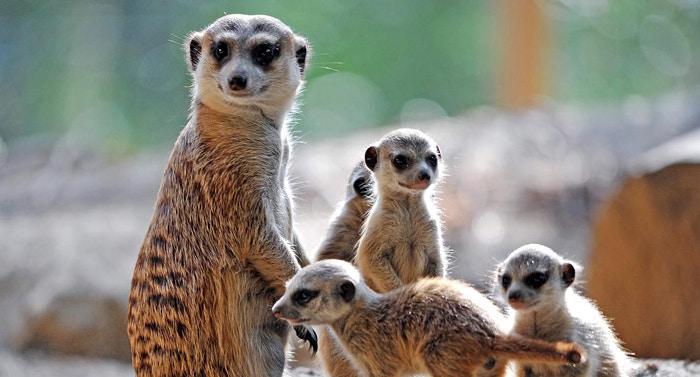 Zoo Rostock Gutschein 2 für 1 Coupon