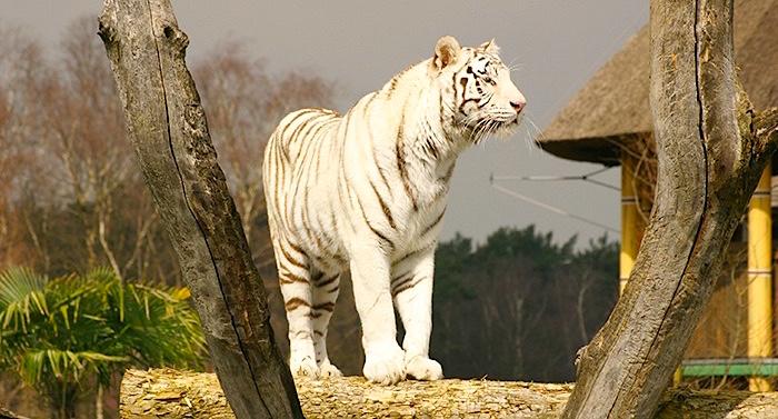 Zoo Safaripark Stukenbrock Gutschein