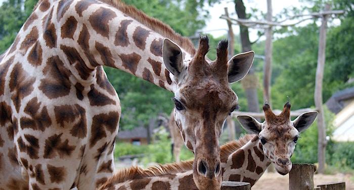 Zoo Schwerin Preise