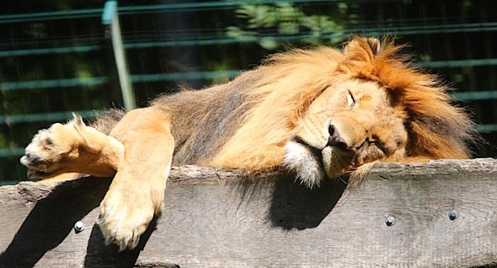 Eberswalde eintritt zoo Zoologischer Garten