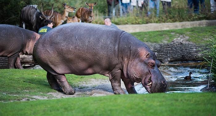 Zoologischer Garten Berlin Gutschein 2 für 1 Coupon