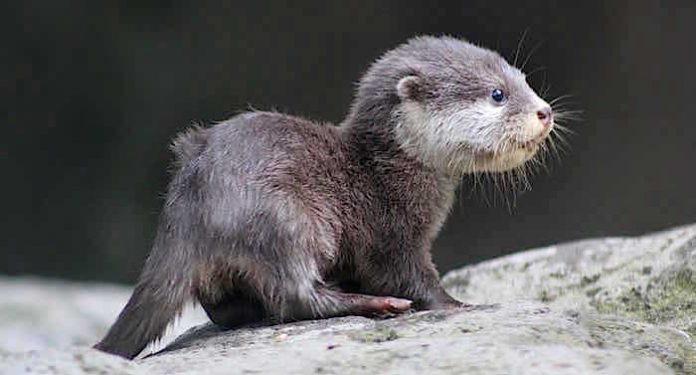 Otter-Zentrum Gutschein 2 für 1 Coupon Ticket