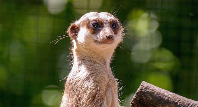 Zoo Aschersleben Gutschein