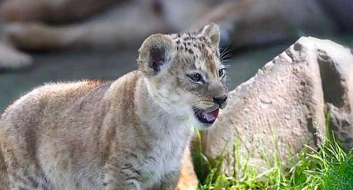 Zoo Neuwied Gutschein