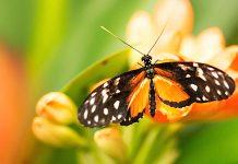 Alaris Schmetterlingspark Gutschein