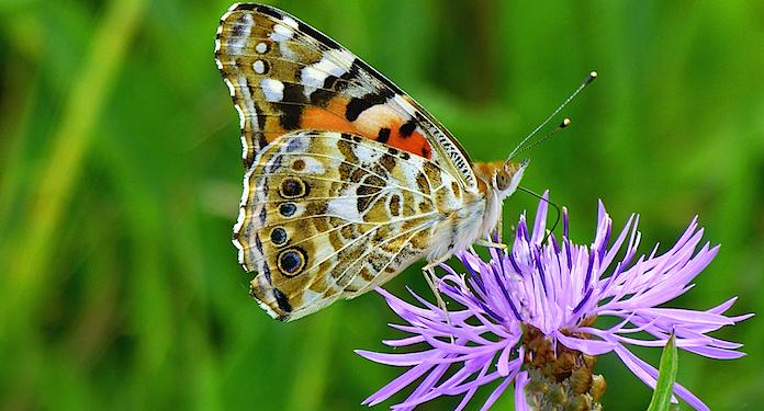 Schmetterlingsgarten Grevenmacher Gutschein 2 für 1 Coupon Ticket