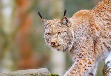 Tierpark Buchenberg
