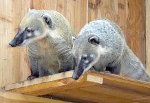 Tierpark Zabakuck Gutschein