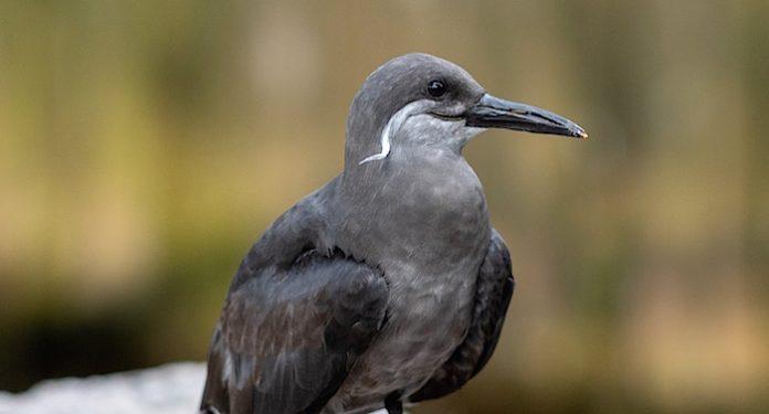 Weltvogelpark Walsrode Gutschein