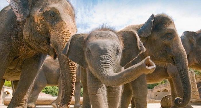Erlebnis Zoo Hannover Gutschein