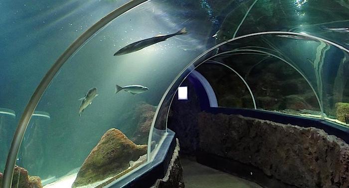 Sylt Aquarium Gutschein 2 für 1 Coupon