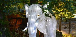 Zoo Osnabrück Zoo Lights