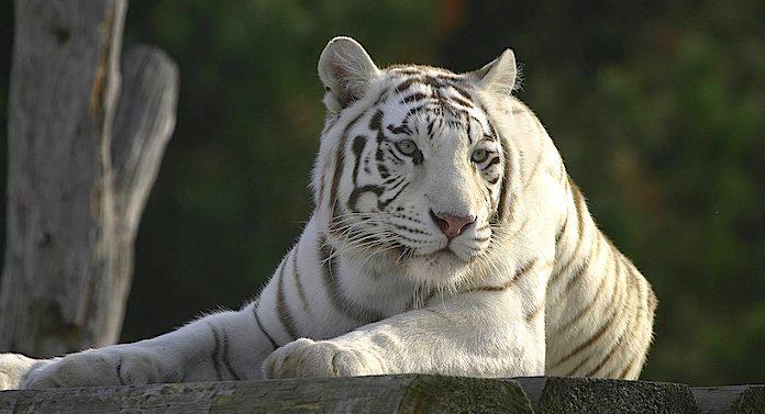 Zoo Safaripark Stukenbrock Rabatt Gutschein Coupon