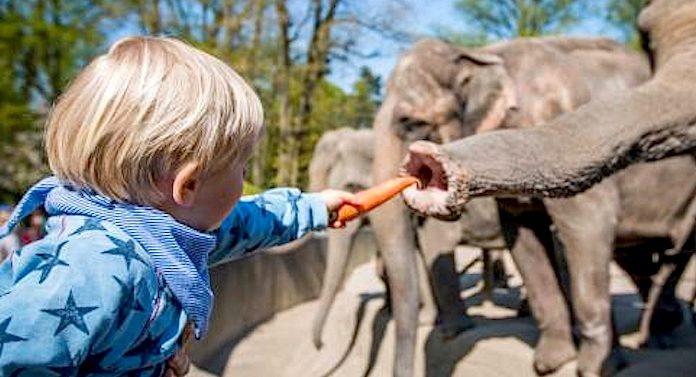 Reise Gutschein Hamburg Tierpark Hagenbeck
