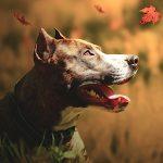 Zeitschrift Der Hund Kostenlos