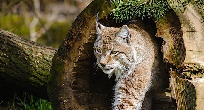 Tierpark Haag