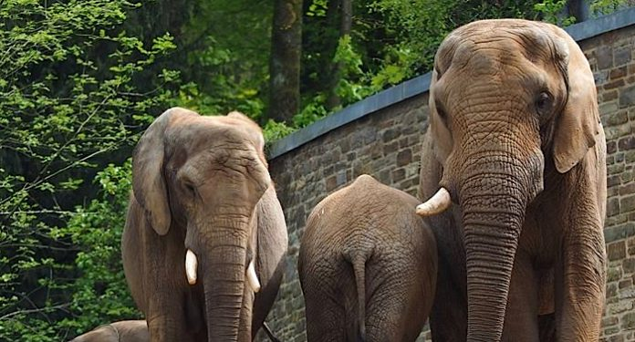 Zoo Wuppertal Elefant