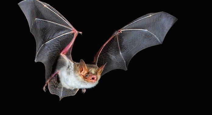 Noctalis Welt der Fledermäuse Gutschein