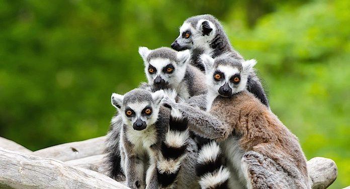 Tierpark Sababurg Gutschein Gewinnspiel