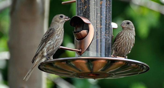 Weltvogelpark Walsrode Winter Fütterung
