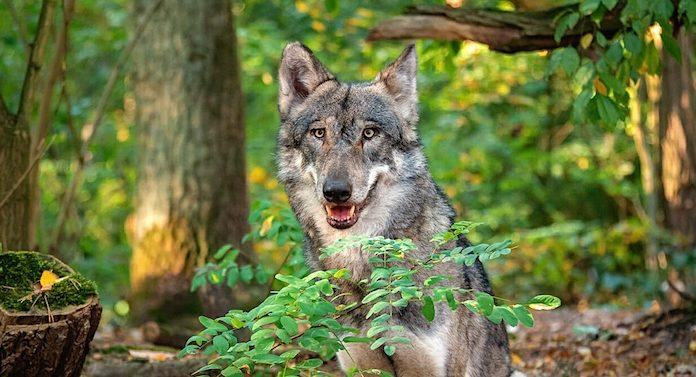 Wolfcenter Dörverden Gutschein Gewinnspiel