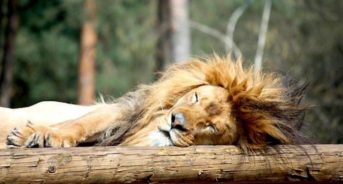 Zoo Safaripark Stukenbrook Gutschein