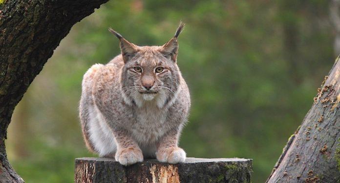 Gutscheinheft Lüneburger Heide: Tierpark Rabatte Wildpark Schwarze Berge Gutschein