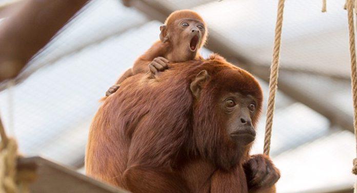 Kölner Zoo Gutschein