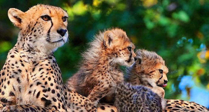 Linda Apotheken Afrika Safari Reise