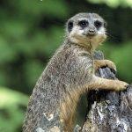 Serengeti-Park Gutschein Jahreskarte