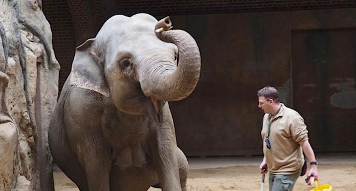Zoo Leipzig Elefantoser Nachwuchs Am Freitag Mama Und Baby Wohlauf