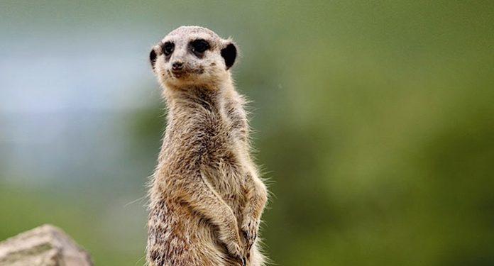 Zoo Neuwied Gutschein Gewinnspiel