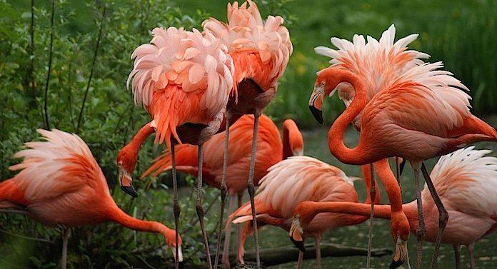 Zoo Schwerin Gutschein