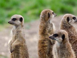 Burgers´ Zoo Gutschein
