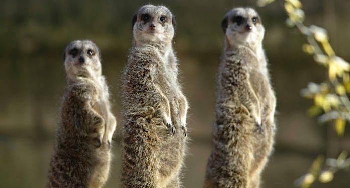 Erlebnis Zoo Hannover Gutschein Freikarte