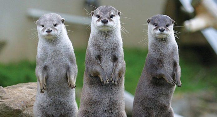 Otter-Zentrum Gutschein