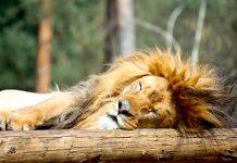 Safariland Stukenbrock Gutschein 2 für 1 Coupon Ticket Rabatt