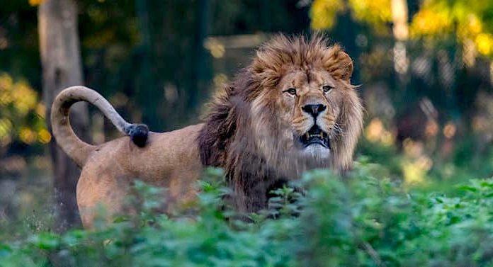 Zoo du Bois d'Attilly Gutschein