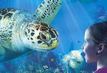 ROFU Gewinnspiel Sea Life