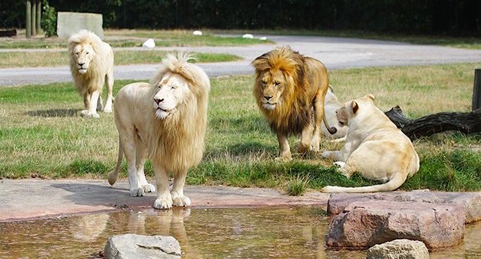 Safariland Gutschein 2 für 1 Coupon Ticket Rabatt