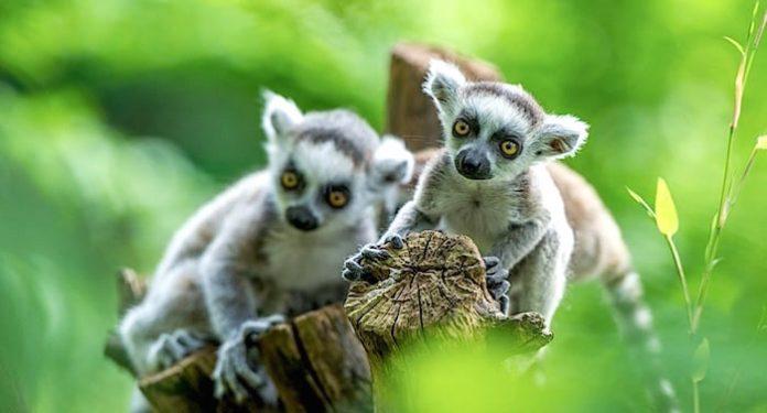 RUHR.TOPCARD Freizeitpark und Tierpark Rabatte