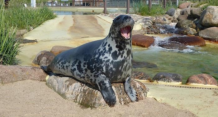 Seehundstation Friedrichskoog Gutschein