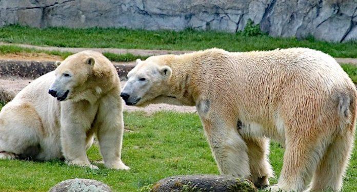 Zoo Karlsruhe Gutschein Freikarte