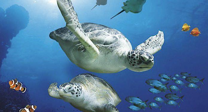 TOGGO Sea Life Gutschein Gewinnspiel