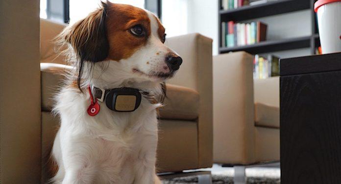 Vodafone GPS Hundehalsband