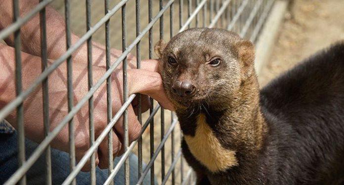 Wildkatzenzentrum Felidae Wildkatzen & Artenschutzzentrum Barnim Gutschein 2 für 1 Coupon Ticket