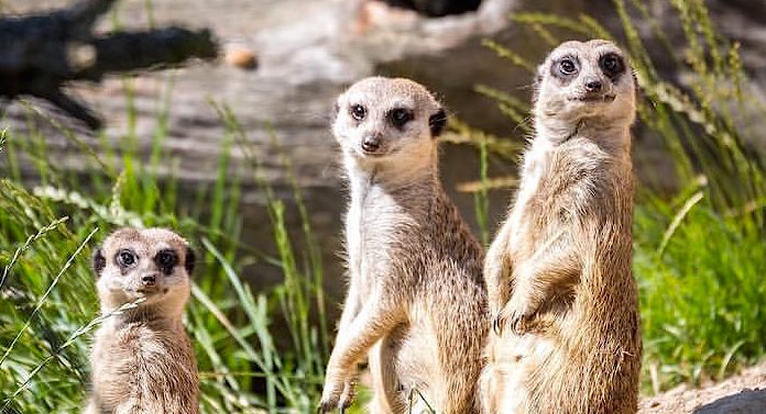 Zoo Hoyerswerda Rabatt Rabattaktion Tierparks Sachsen