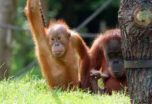 Zoo Leipzig Entdeckertage Affen