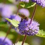 Blumen Bienen