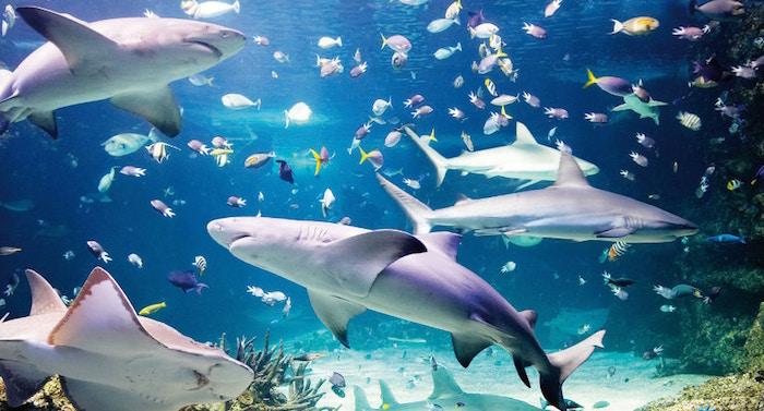 Ferrero Familienfreizeit Gewinnspiel: Sea Life Sydney